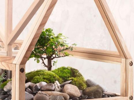Plantas y flores decorativas para triunfar con una decoración verde y natural